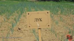 За фактом самовільного захоплення 10га землі судитимуть директора сільськогосподарського підприємства