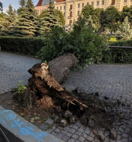 У Чернівцях на Театральній площі впало дерево (фото)