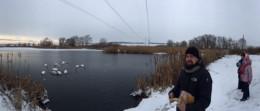 15 лебедів оселилися на озері в Суховерхові Кіцманського району