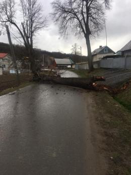 На Буковині сильний вітер вирвав з корінням дерево