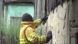 У будинку чернівчанки знешкодили рій агресивних джмелів (відео)