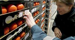На Буковину тричі намагалися завезти заражені помідори