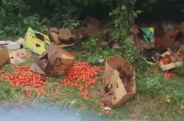 У Чернівцях невідомі викинули велику партію помідорів на березі Пруту