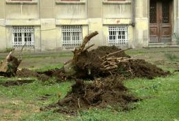У сквері біля центрального корпусу ЧНУ поспилювали деякі дерева