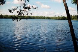 На Сокирянщині чоловік захопив майже 55 гектарів землі водного фонду
