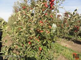 На Буковині сільрада незаконно надала в оренду п'ять гектарів землі