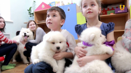 На Буковині дітей з ДЦП лікуватимуть за допомогою собак