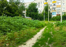 У Чернівцях за нескошені газони каратимуть фірми й організації