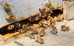На Буковині двоє крадіїв отримали рік умовно за крадіжку вулика із бджолами