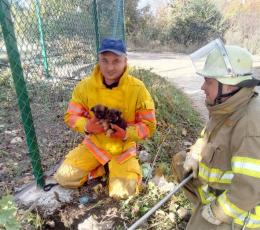 Чернівецькі рятувальники врятували двох цуценят