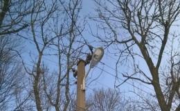 На Буковині невідомі розстріляли з мисливської рушниці вуличний ліхтар