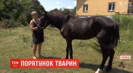Родина з Чернівців рятує побитих та хворих коней (відео)