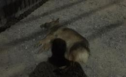 У Чернівцях уночі біля «Водограю» потруїли собак