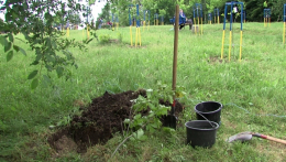 У Чернівцях в парку «Жовтневому» посадили дуб