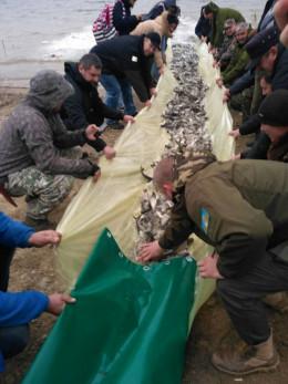 На Буковині у Дністер випустили три тонни малька (фото)