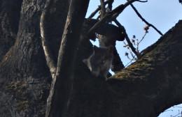 На Буковині у райцентрі кота п'ять діб не могли зняти з дерева