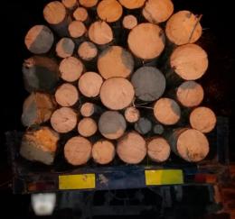 На Буковині затримали двох чоловіків, які вивозили ліс КАМАЗом і підводами