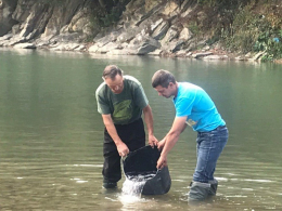 У річки Прут та Черемош випустили понад 13 тисяч екземплярів лосося