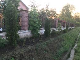У Чернівцях з-під будинку співачки невідомі викрали туї (фото)