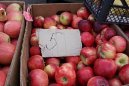 Фермери пояснили, чому на Буковині низька ціна на яблука