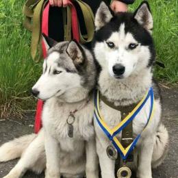 У Чернівцях невідомі жорстоко вбили двох собак (фото)