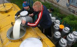 На Буковині ще півроку прийматимуть молоко від селян