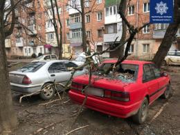 На Буковині через нічний буревій повалені дерева, стовпи та потрощені автівки (фото)