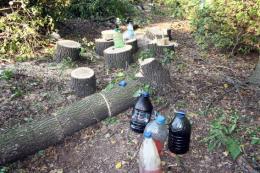 На Буковині в одному з лісництв незаконно зрубали 40 дерев різних порід