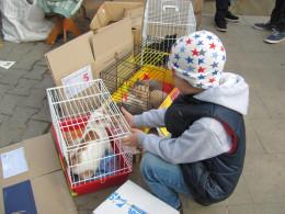 На Дні міста у Чернівцях роздають домашніх тваринок