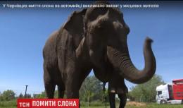 З'явилися подробиці резонансного миття слона на автомийці у Чернівцях