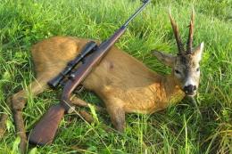 На Буковині браконьєри вбили двох козуль