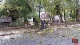 """У Чернівцях на Соборній площі, навпроти кафе-бару """"Богеміус"""", на дорогу впало дерево (фото)"""
