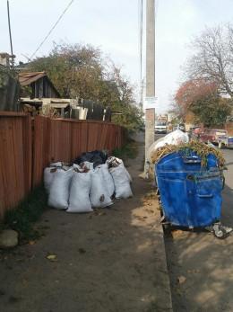 Чернівчан просять складати мішки з опалим листям біля сміттєвих контейнерів (фото+відео)