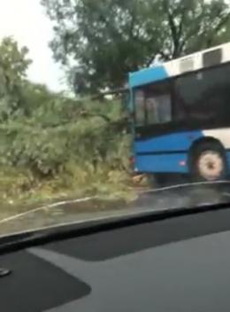 У Чернівцях на вулиці Галицький шлях перед маршруткою впало дерево (відео)