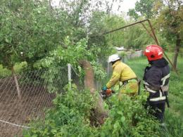 На Буковині сильний вітер повалив дерева, які пошкодили дахи житлових будинків