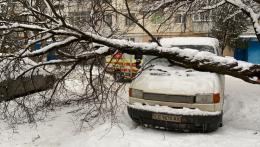 У Чернівцях на припарковану автівку впало дерево