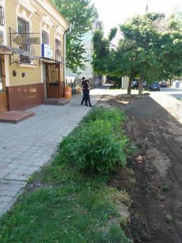 У Чернівцях в центрі міста невідомі знищили зелену зону (фото)