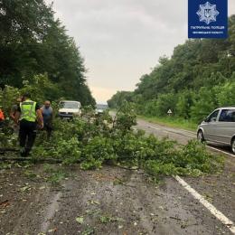 На Буковині на автомобільній трасі внаслідок сильної зливи повалено 10 дерев