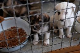 У Чернівцях через переповнений притулок для безпритульних тварин хоче звільнитися директор