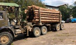 Буковинець перевозив більше півсотні колод деревини за підробленими документами