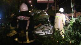 Чернівецькі рятувальники звільняли автівки від повалених дерев (фото)