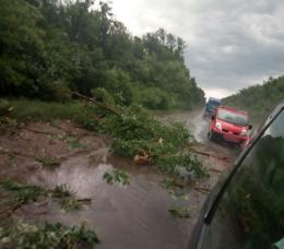 На Буковині буревій поламав дерева вздовж траси (фото)
