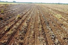 На Буковині фермерське господарство самовільно захопило земельну ділянку