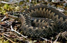 На Буковині хлопець потрапив до лікарні через укус змі'ї