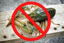 На Буковині заборонили вилов раків