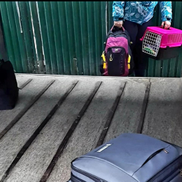 «Це просто нелюдяність»: у холодному багажнику автобуса «Харків–Чернівці» перевозили кошенят (фото+відео)