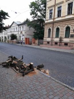 У центрі Чернівців зрізали клени, на які скаржились водії маршруток