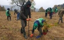 На схилах Буденецького лісництва посадили дубовий гай
