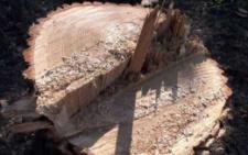 У парку «Жовтневий» позрізали дерева