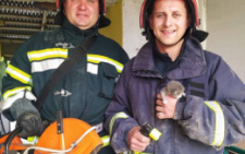 На Буковині з вентиляційної шахти витягнули кошеня
